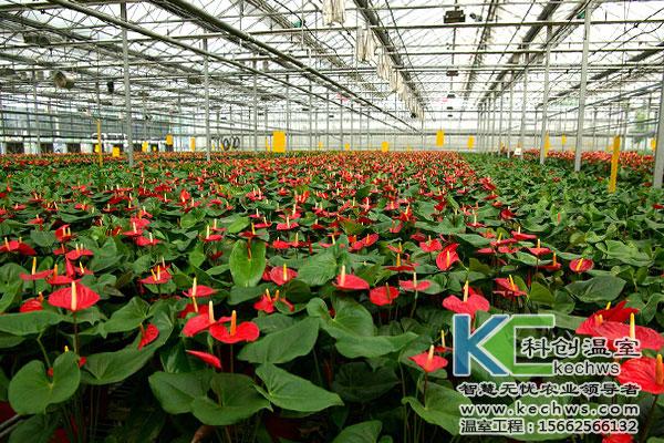 一畝花卉種植溫室大棚造價多少(shao)錢