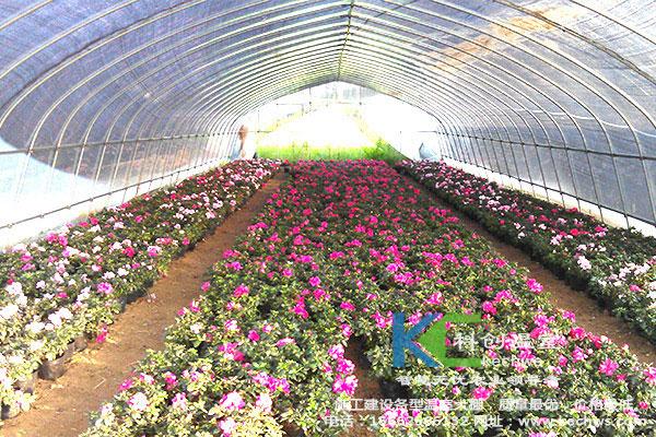 花卉大棚结构图片大全