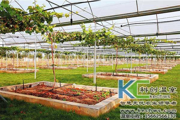温室大棚葡萄高产栽培技术