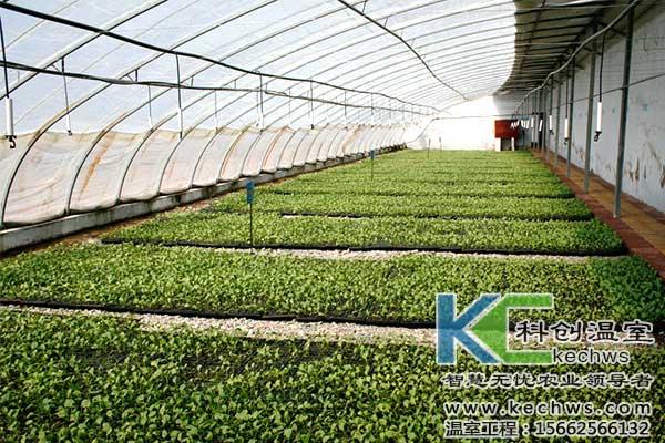 温室大棚,蔬菜,种子,消毒
