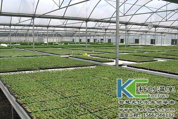 温室大棚,蔬菜种子,消毒