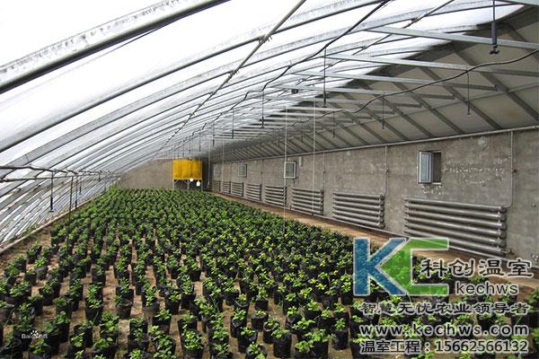 蔬菜大棚,种子,消毒