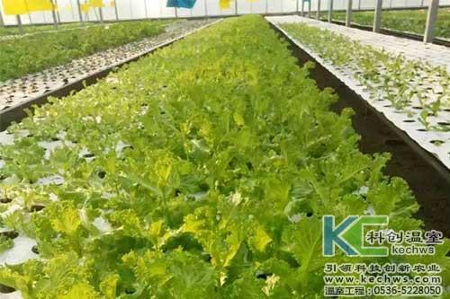 无土栽培,无土栽培技术,无土栽培应用