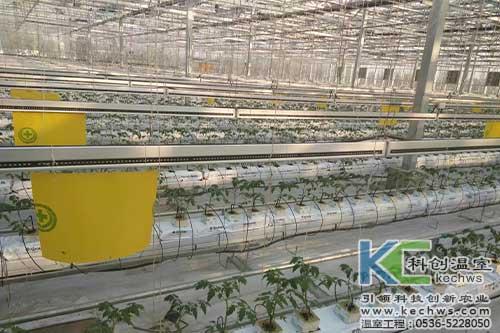 黄瓜,无土栽培,无土栽培技术