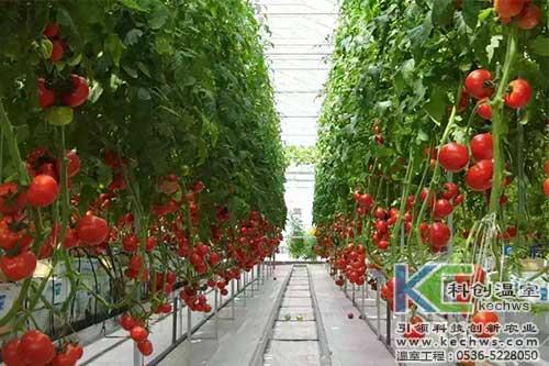 番茄,无土栽培,无土栽培技术