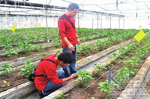 温室大棚,基质栽培,无土栽培