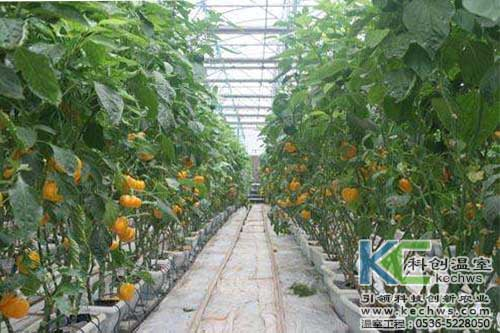 甜椒,无土栽培,无土栽培技术